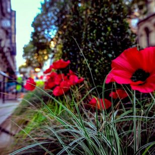 Poppies on the public realm protection barriers on New Street